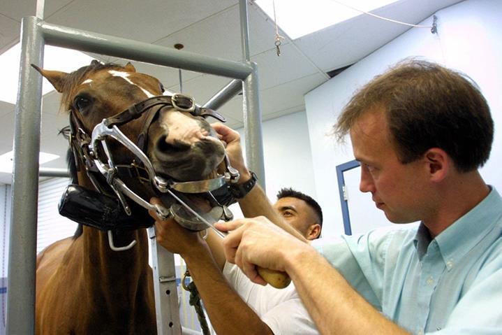 Merawat mulut dan gigi kuda. Sumber foto: Careerscall