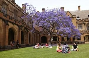 Figure 1. Saat cuaca cerah, mahasiswa memilih untuk belajar di halaman rumpt USyd. Sumber foto: International Undergraduate Guide.pdf